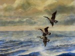 Susquehanna Winter Geese by Steven Heffner